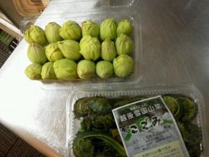 山菜(こごみ、ふきのとう)