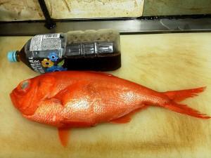 s-銚子の金目鯛